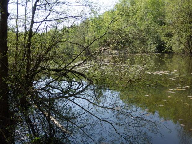 Allbrook Lakes