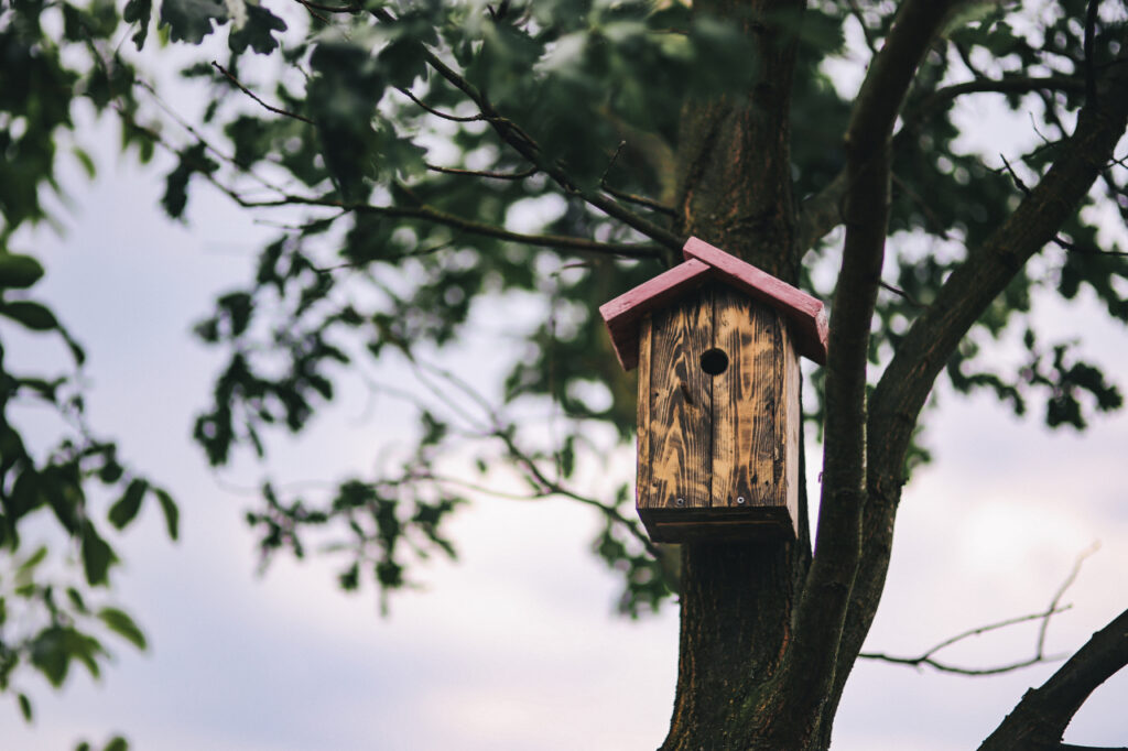 Birdhouse on a Tree - image by kaboompics